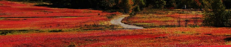blueberry_barrens_red